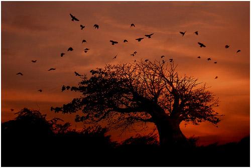 Fotografowanie czarnych konturów obiektów w fotografii krajobrazowej